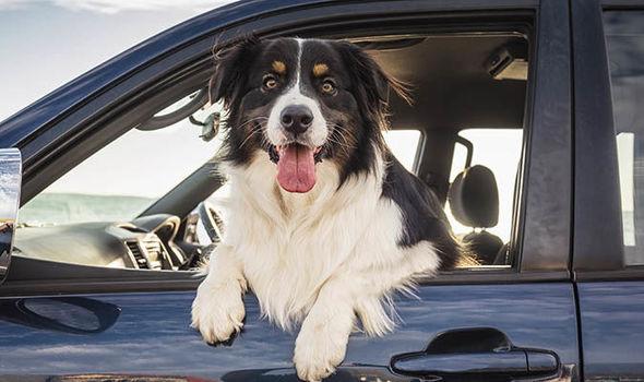 Σκύλος στο αυτοκίνητο; 7 συμβουλές ασφαλείας!