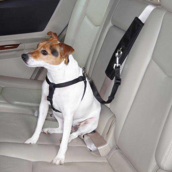 Ζώνη ασκαλείας σκύλος αυτοκίνητο