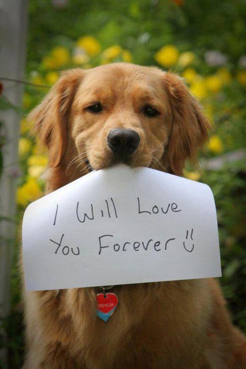 Σκύλος οικογένεια αγάπη