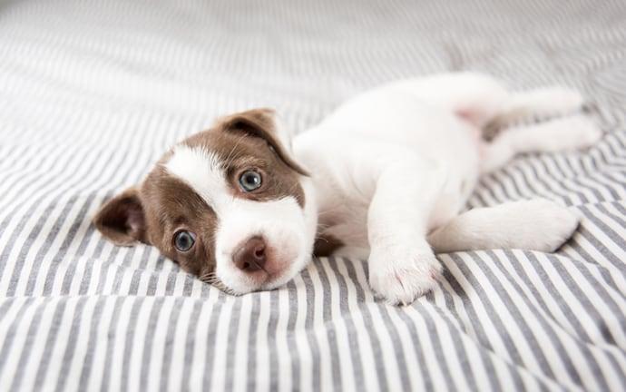 Πρώτη φορά σκυλογονιός; Τι πρέπει να κάνεις και τι όχι…