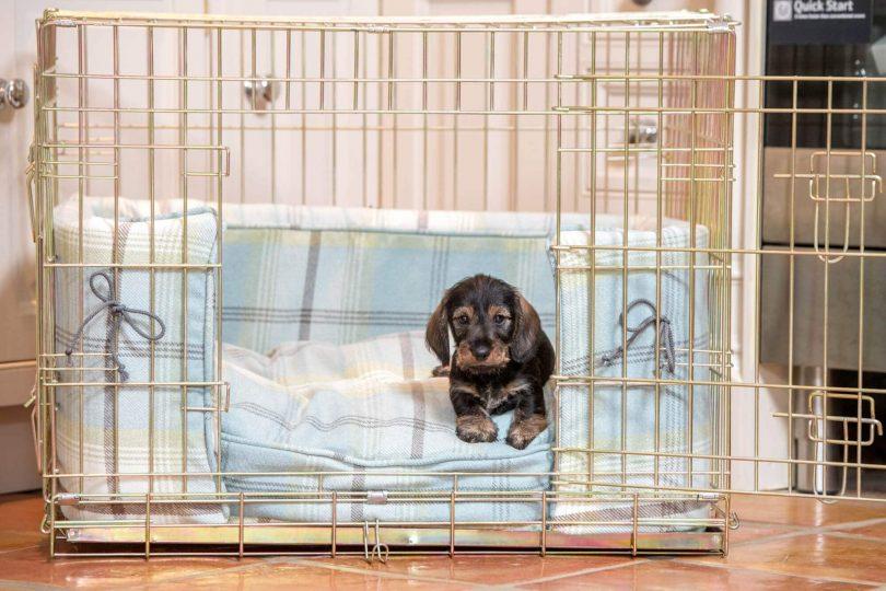 Κλουβί σκύλος εκπαίδευση
