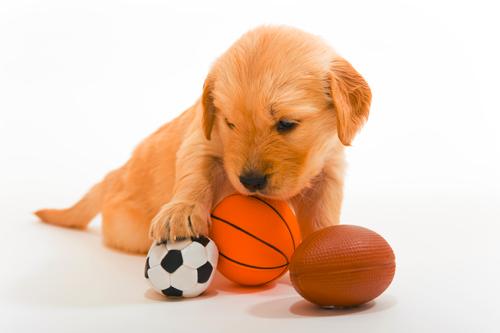 Σκύλος παιχνίδια ερεθίσματα