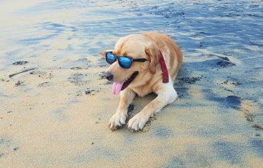 Ο σκύλος μου στη θάλασσα και ο κλασικός που μου κάνει παρατήρηση