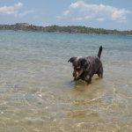 Πιστοποιητικό εισαγωγής σκύλου στη θάλασσα